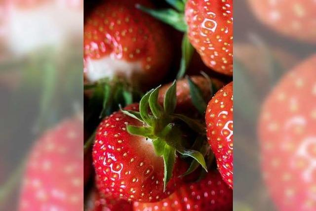 Züchter nennt seine Erdbeere