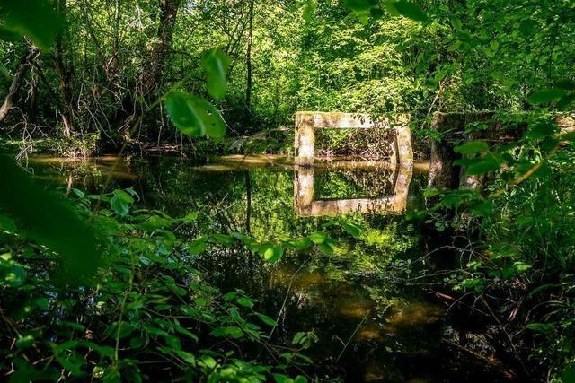 Südbadens Dschungel von morgen: Der Taubergießen