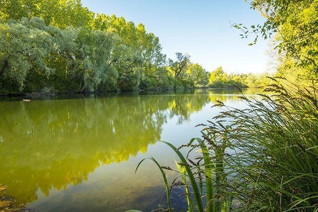 Der Taubergießen - Südbadens Dschungel von morgen