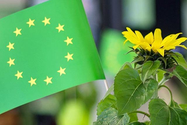 Europawahl: Grünen liegen in Freiburg haushoch in Führung