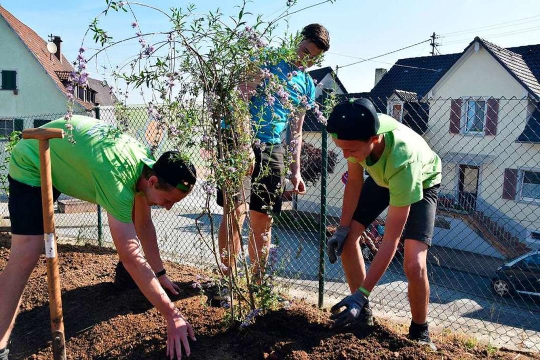 Bepflanzt wurde von Jugendlichen in Ki... das Außengelände des Bernhardusheims.  | Foto: Andrea Gallien