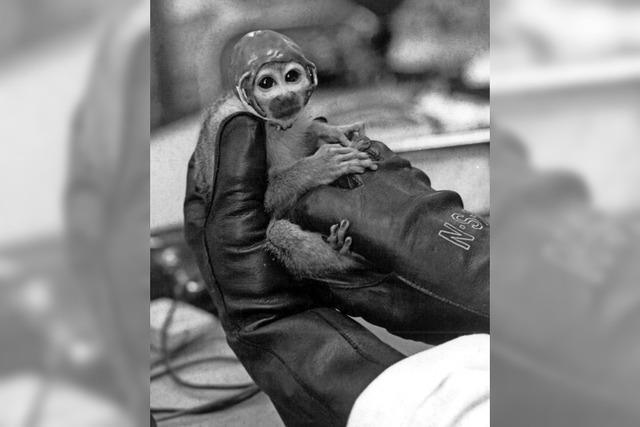 Fanpost für die Astro-Affen