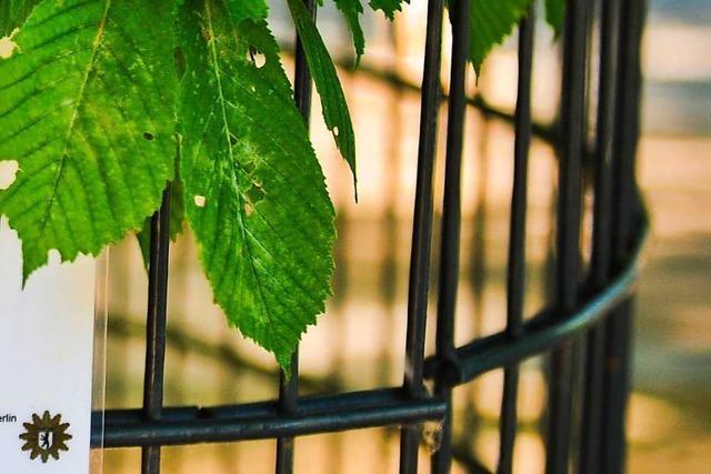 Neu aufgestellter Zaun auf Schulgelände mutwillig umgerissen