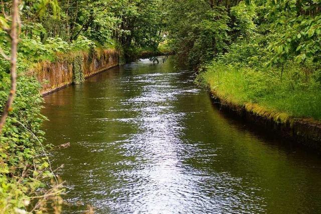 Jagdpächter: Streunende Hunde könnten Rehe und Wildschweine in Kanal gehetzt haben