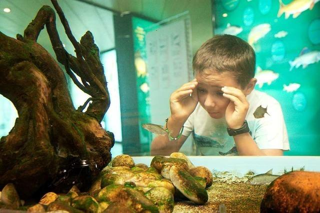 Im Besucherzentrum am Fischpass Gambsheim kann man Fische beobachten