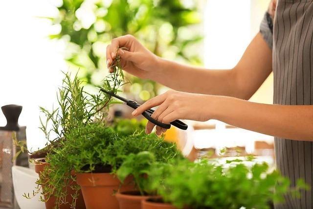 Die grüne Küche - Pflanzen im Herz des Hauses