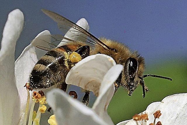 Insektenhotels, Blumensamen und jede Menge Infos