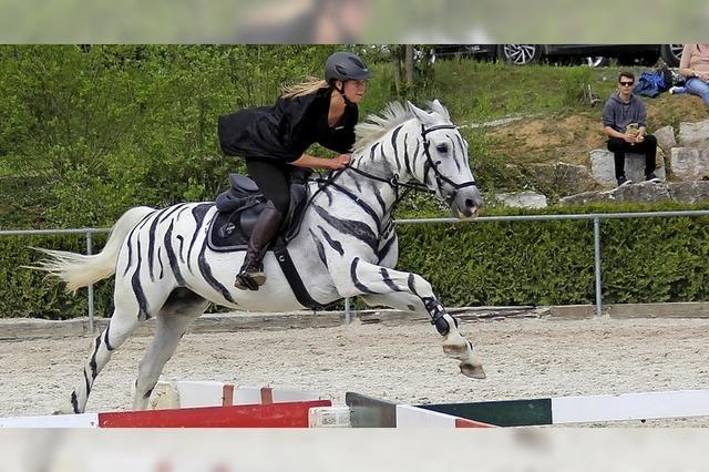 Faszination Zirkus und Pferd