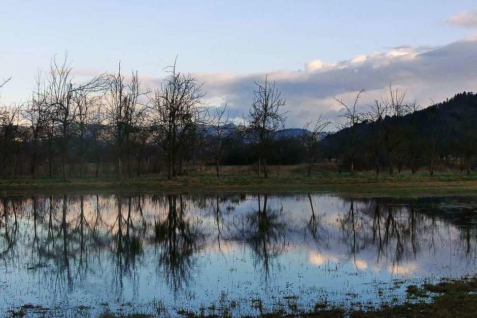 Gewinnerfoto: Sieht ein bisschen gespenstisch aus: Bäume, die sich in den Himmel strecken. Ein Foto von Jule Strohmaier aus der Klasse 10a des Offenburger Grimmelshausen-Gymnasiums. (Foto: Jule Strohmaier)