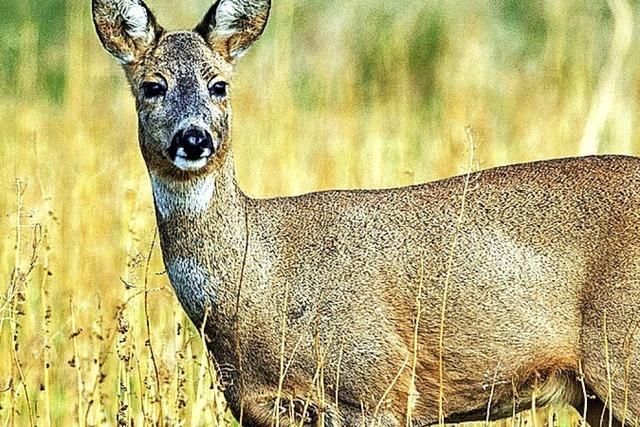Mehr Sicherheit für Wildtiere