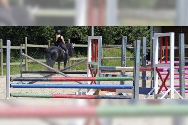 Was verletzte die Sickenbühl-Pferde?