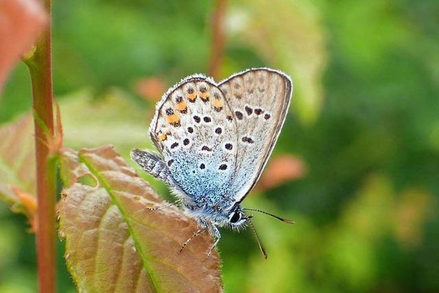 Löffingen zeigt Engagement zur Erhaltung bedrohter Arten