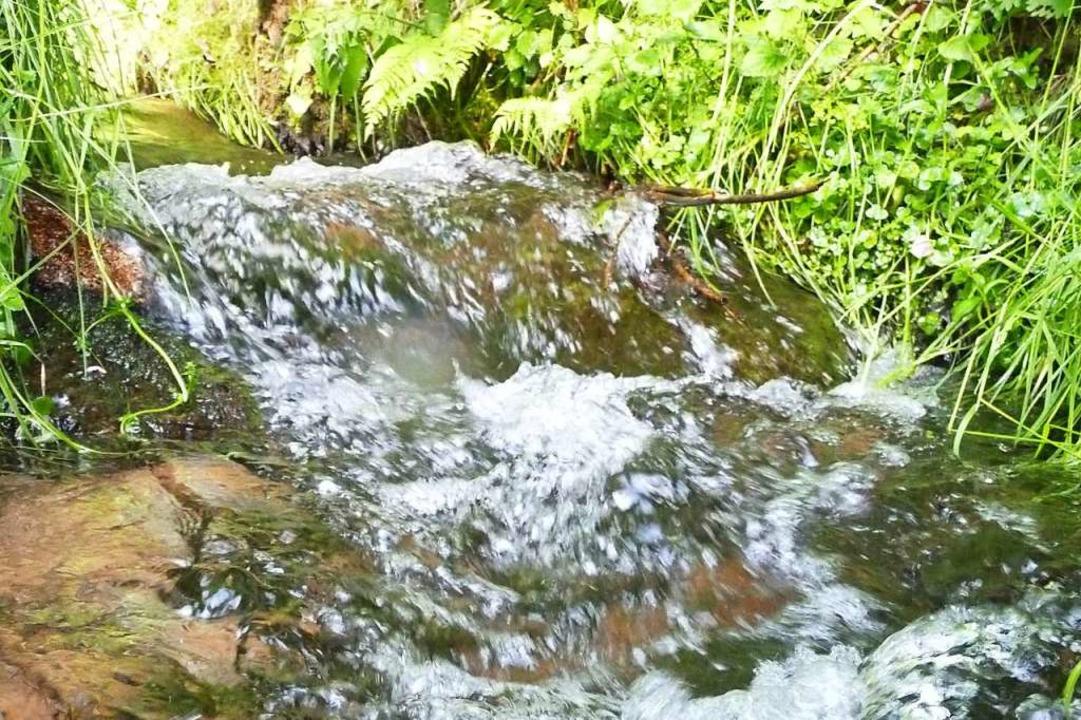 Das plätschernde Wasser fließt vom Künabach in einen Kanal...  | Foto: Sattelberger