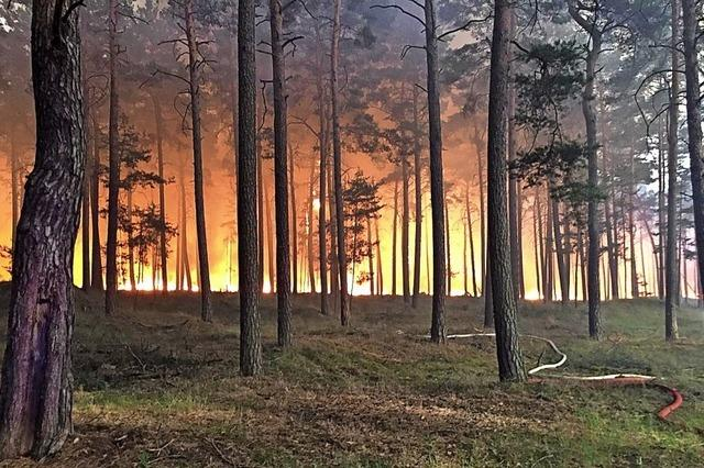 Und schon brennen wieder die Wälder