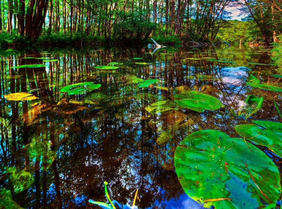 Wild:  Die Wakenitz fließt durch eine naturbelassen Landschaft.   | Foto: Thomas Ebelt