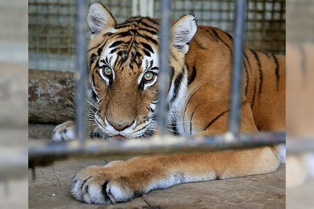 Wildtierverbot im Zirkus?