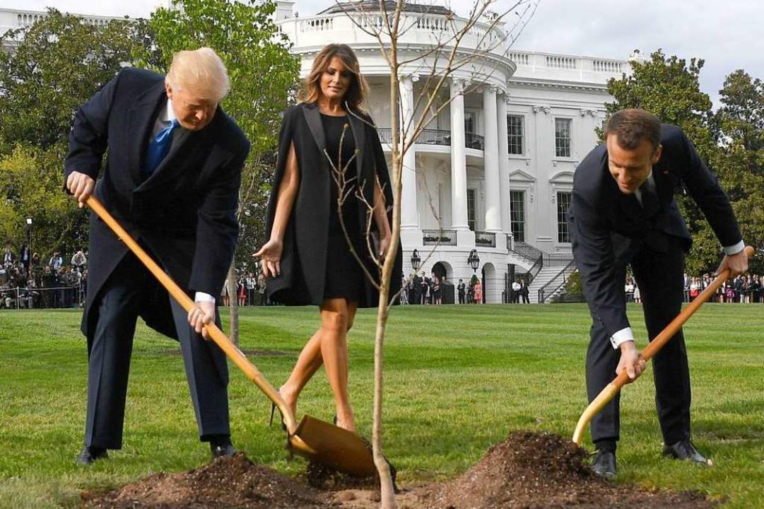 Nicht von Erfolg gekrönt war die präsidiale Pflanzaktion vorm Weißen Haus.  | Foto: JIM WATSON (AFP)