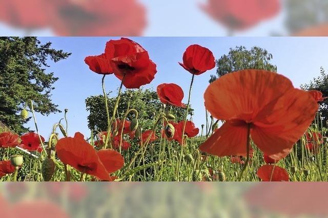 Blumen mit Signalwirkung
