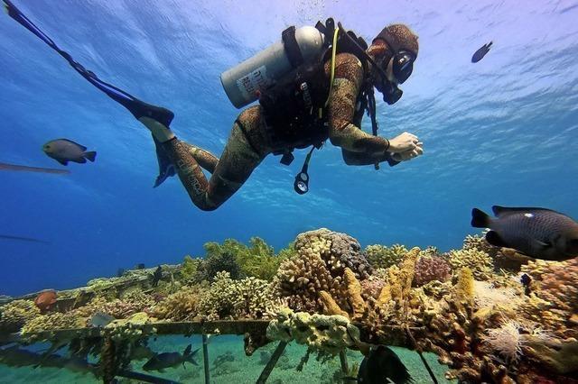 Korallen im Roten Meer in Gefahr