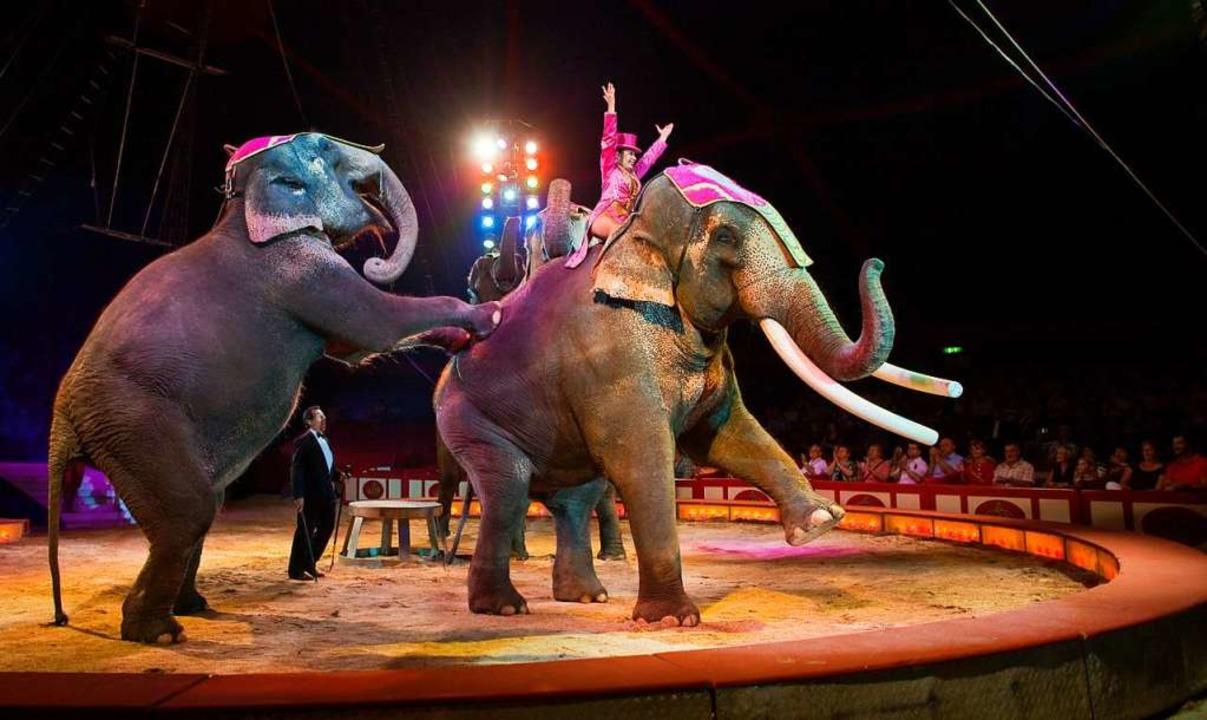 Zwei Elefanten führen in einer Zirkusm...ke vor. Tierschützer kritisieren das.   | Foto: Patrick Pleul