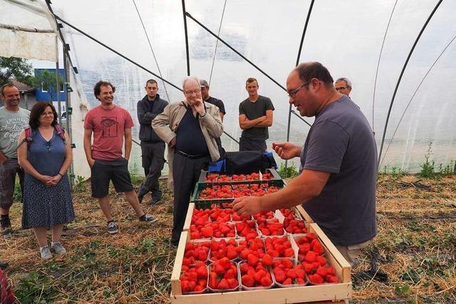 Erdbeerbauern setzen auf Umweltschutz