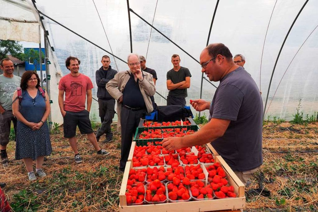 Erdbeerbauern stellten sich Fragen von Verbrauchern.  | Foto: bross