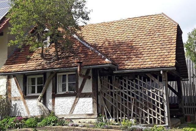 Besondere Dachbegrünung