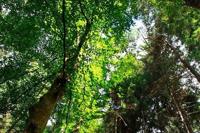 Warum der Wald für den Menschen die ideale Gegenwelt ist