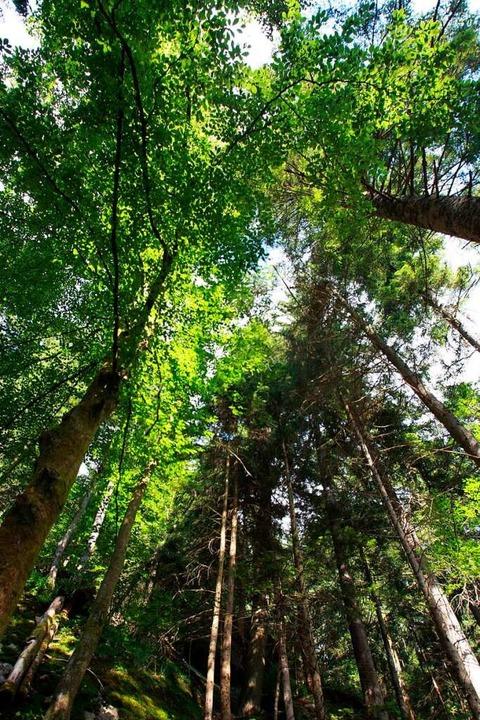 Wo Bäume stehen, wandert der Blick automatisch nach oben.  | Foto: Patrick Seeger