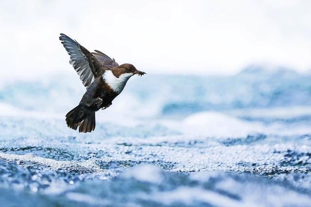 Preisträgerbilder aus dem Wettbewerb der Gesellschaft deutscher Tierfotografen (GDT) in Feldberg
