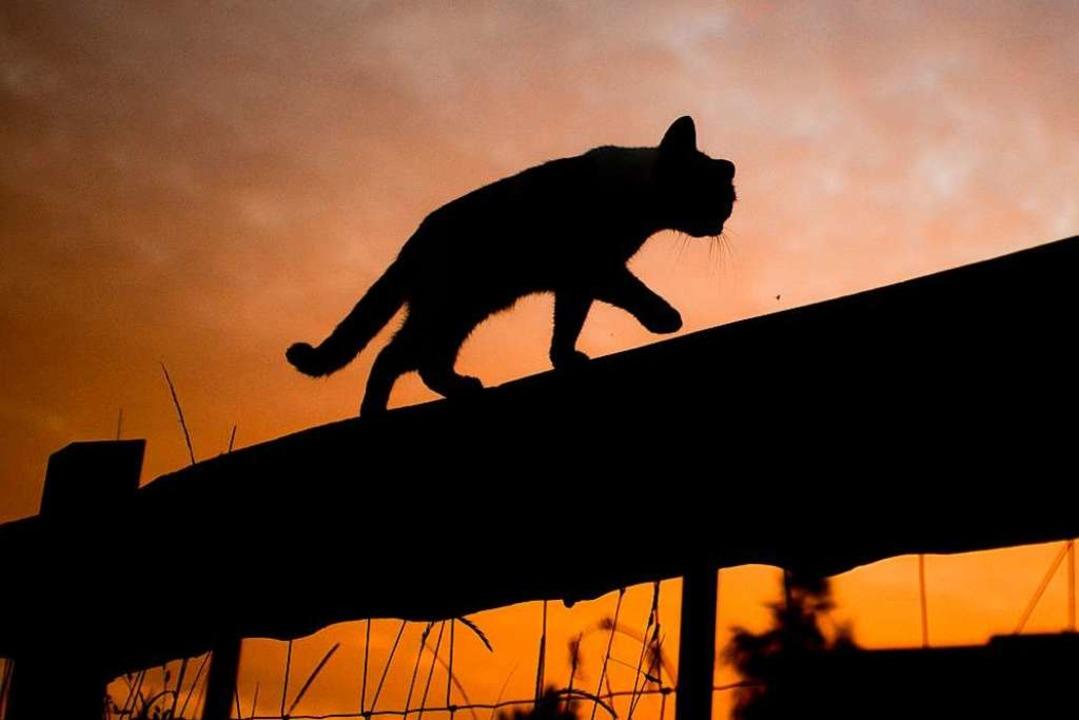 Animal Hoarding ist eine Krankheit, un... Mensch als auch Tier zu leiden haben.  | Foto: Julian Stratenschulte