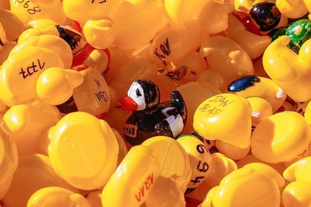 Gelbe Plastikenten liefern sich ein spannendes Rennen