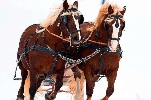 In der Innenstadt sollen keine Pferde zum Bewässern von Pflanzen eingesetzt werden