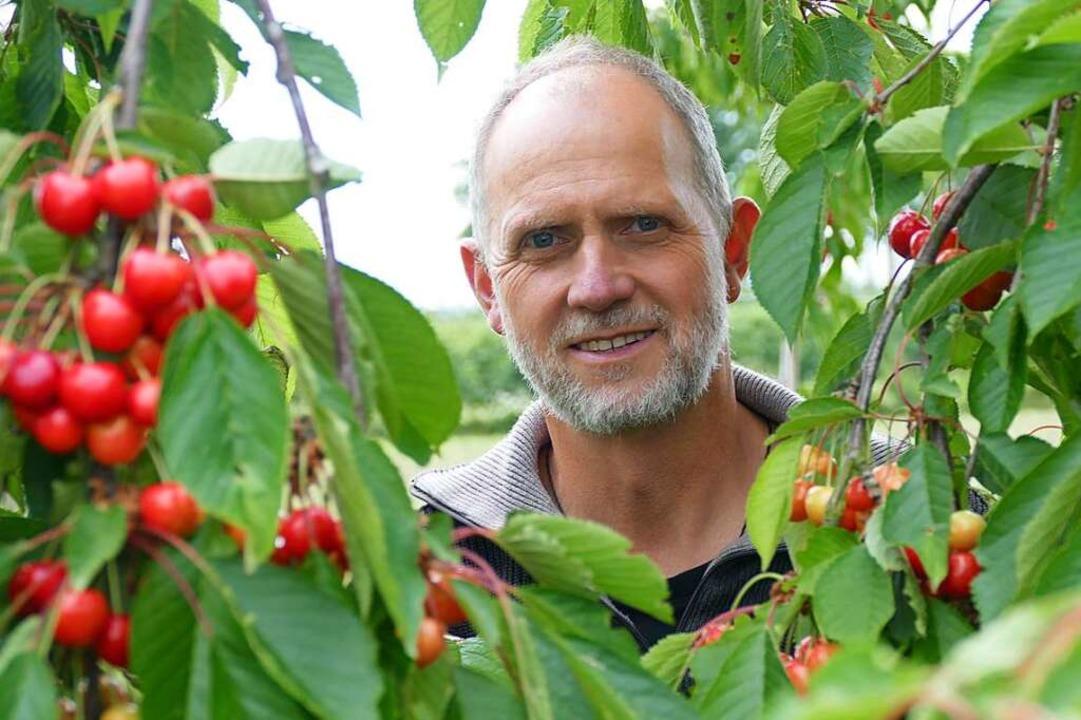 Kurt Sehringer baut seit mehr als 30 Jahren Kirschen in Schallstadt-Mengen an.  | Foto: Frank Schoch