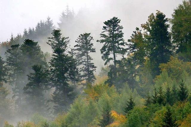 Welche Folgen hat der Klimawandel für den heimischen Wald?