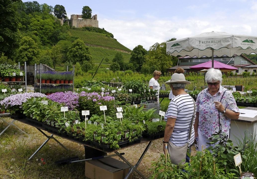 Besucher beim Stöbern – mit Blick auf die Burgruine   | Foto: Christa Hülter-Hassler