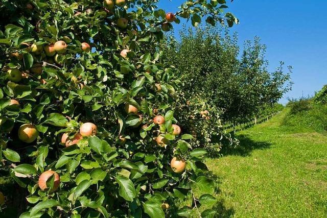 Unbekannte sägen 15 Obstbäume ab