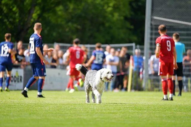 Tierischer Flitzer! Hund mischt Fußballspiel des Freiburger FC auf