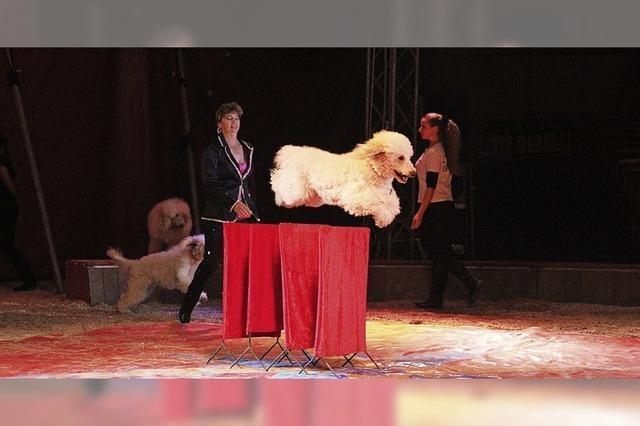 Circus Alessio in Bad Krozingen