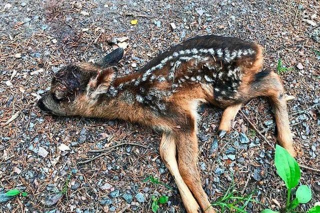 Wildernder Hund beißt Rehkitz tot