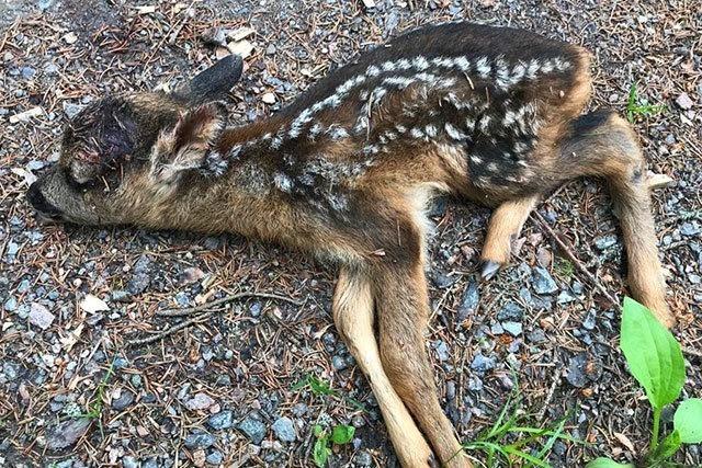Hund beißt Rehkitz am Feldberg tot – was sagt ein Jagdpächter dazu?