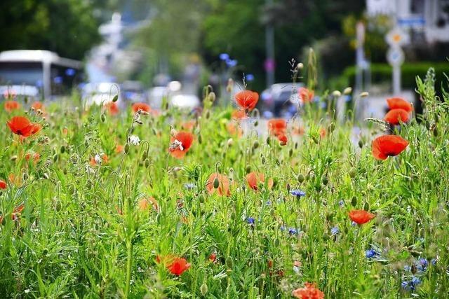 Freiburg ist Vorreiter beim Insektenschutz, aber das reicht noch nicht