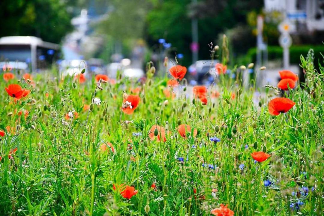 Bunte Blumenwiesen sind gut für Insekten, aber auch für das Klima in Städten.  | Foto: Barbara Ruda
