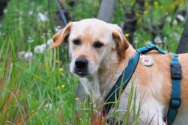 Hunde können in einer Freiburger Tierklinik Blut spenden