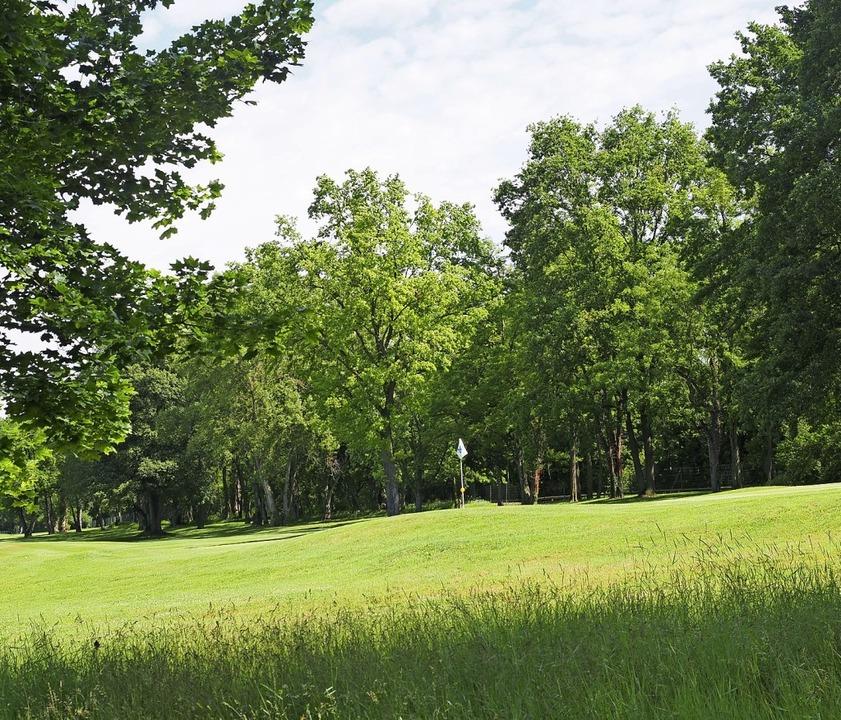 Kein Park, ein Golfplatz: Das hohe Gra... Zone, in der auch Orchideen wachsen.   | Foto: Jutta Geiger