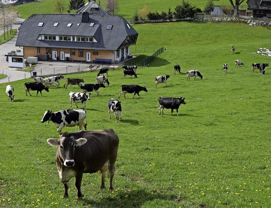 Zum ersten Mal wieder draußen: die Kühe der Familie Lorenz    | Foto: Pettini
