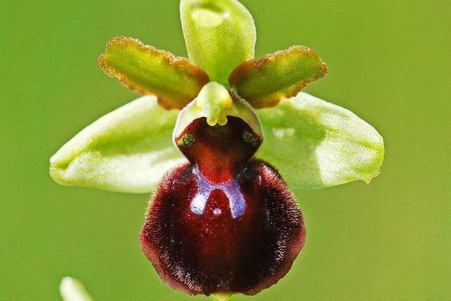 Keine der Spuren im Fall der verschwundenen Orchideen führt zu Menschen