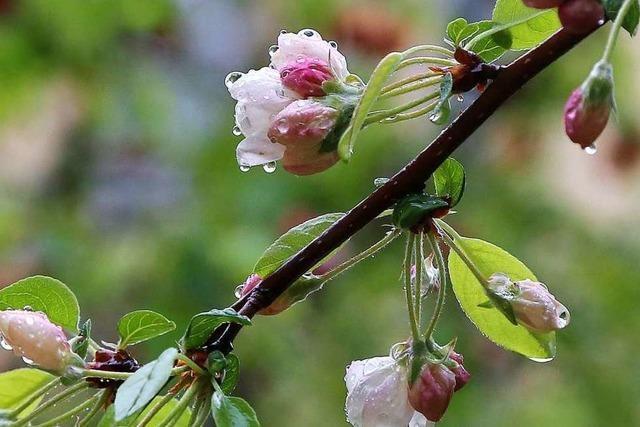 Regen im Frühling