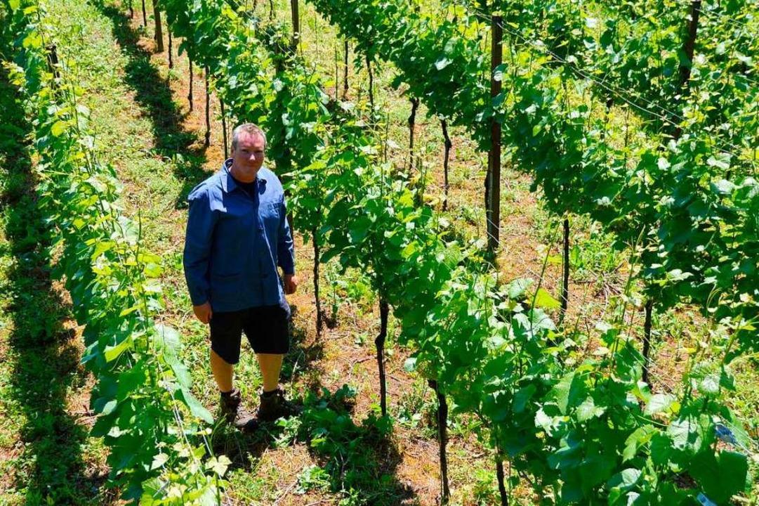 Obstbauer Alexander Drechsle in seinen Reben  | Foto: Horatio Gollin