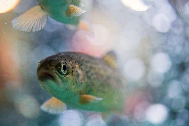 Bekommen Fische eigentlich Durst?